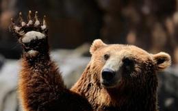 Bloomberg: Bong bóng chứng khoán đã bắt đầu được thổi phồng khi vốn hoá thị trường chạm mốc 21 nghìn tỷ USD!