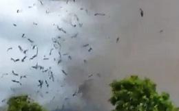 Danh tính 3 nạn nhân tử vong trong vụ lốc xoáy làm sập nhà xưởng hơn 2.000m2 ở Vĩnh Phúc