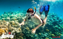 6 vùng biển lặn ngắm san hô đẹp nhất Việt Nam: Rực rỡ đến mê đắm lòng người