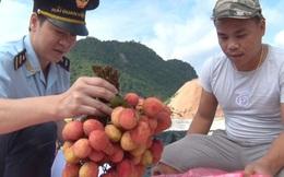 Tín hiệu vui cho xuất khẩu vải quả tươi sang Trung Quốc