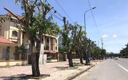"""Hàng loạt cây xanh ở thành phố Vinh bị """"cắt trụi"""" trong nắng nóng đỉnh điểm"""