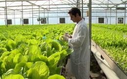 """""""CNTT không phải là yếu tố cốt lõi của nông nghiệp công nghệ cao"""""""