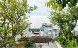 Nhờ có sân thượng trồng cây mà nhà phố xanh y như nhà vườn