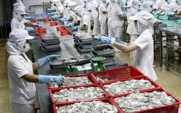 Thủy sản 4 (TS4): Quý 2 báo lỗ 20 tỷ đồng – cao nhất trong lịch sử hoạt động