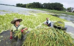Covid-19, lũ lụt, chiến tranh thương mại: TQ đang đối mặt với nguy cơ an ninh lương thực như thế nào?