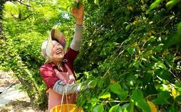 """Kỳ lạ nghề hái lá cây giúp """"hội chị em cao tuổi"""" Nhật Bản thu về hơn 50 tỷ đồng/năm!"""