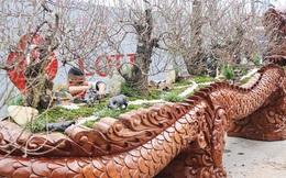 Hà Nội: Cận cảnh chậu đào khủng làm từ gỗ chò Nam Phi có giá bạc tỷ, dành riêng cho đại gia chơi Tết
