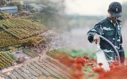 Cánh đồng hoa lớn nhất Sài Gòn khoe sắc rực rỡ, người nông dân cười tươi chuẩn bị xuống chợ hoa Xuân