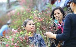 Đào, quất, hoa ngập tràn phố trước rằm tháng Chạp