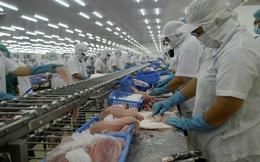 Giữ 'đường bơi' cho cá tra Việt