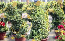 Quất bonsai tạo hình chuột khuấy động chợ hoa Tết
