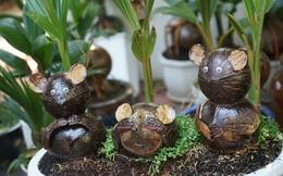 Độc đáo bonsai dừa hình chuột