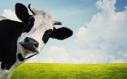 """Bí mật kiếm tiền của một cao thủ sales: Khách hàng tiềm năng chính là """"những con bò sữa có sẵn trong chuồng của bạn"""""""