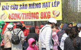 14 tấn sầu riêng về Hà Nội: Treo biển kêu gọi giải cứu, bán theo combo đồng giá 450.000 đồng/8kg