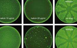 """Trí tuệ nhân tạo vừa giúp các nhà khoa học tìm ra một loại """"kháng sinh mạnh nhất"""" từ trước đến nay"""