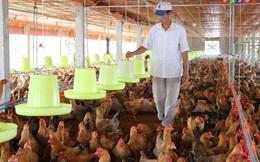 Hơn 100.000 con gia cầm bị tiêu hủy do dịch cúm A/H5N6, H5N1