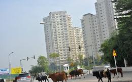 Thanh tra về đất đai loạt dự án bất động sản 'khủng' ở Hà Nội