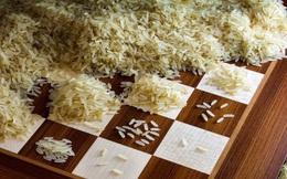 Chơi cờ với nhà thông thái, vị vua tưởng chỉ tốn vài hạt gạo, nào ngờ mất cả giang sơn
