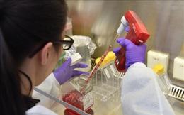 Dịch COVID-19: Bỉ phát triển kháng thể có khả năng vô hiệu hóa virus SARS-CoV-2