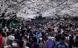Bất chấp cảnh báo về dịch Covid-19, nhiều người ở Nhật vẫn đổ xô đi ngắm hoa anh đào và xem sự kiện tại nhà thi đấu mà không đeo khẩu trang