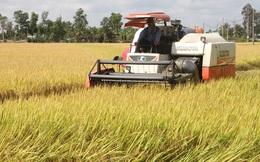 Nông dân ĐBSCL phấn khởi vì lúa Đông Xuân trúng mùa được giá