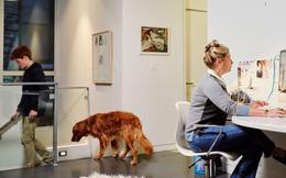 """Làm việc tại nhà giữa bão Covid-19: Tưởng là thoải mái nhưng đằng sau là một vấn đề có thể khiến hiệu quả công việc trở nên """"toang"""" chưa từng thấy"""
