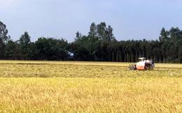 Người trồng lúa Hậu Giang có thu nhập từ 25-50 triệu đồng/ha