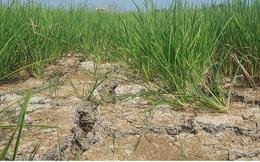Bộ Nông nghiệp đề nghị hỗ trợ hơn 500 tỷ khắc phục hạn hán, ngập mặn