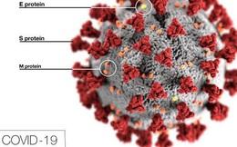"""""""Khối cầu gai"""" khuynh đảo thế giới: Thấy gì từ bức hình minh họa 3D nổi tiếng của virus SARS-CoV-2?"""