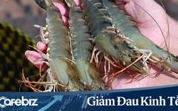 Ngược chiều thị trường nông sản, nhu cầu tôm thế giới đang trên đà tăng, nông dân Việt đối mặt với nguy cơ thiếu nguồn cung nguyên liệu