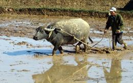 3 con tiểu yêu tìm cách hủy hoại người nông dân, chỉ 1 con thành công: Cách làm của nó cảnh tỉnh rất nhiều người!