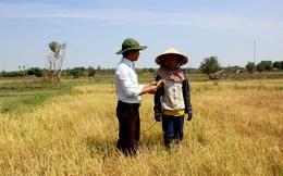 Nắng hạn chạm đỉnh, hơn 10 nghìn hecta cây trồng nguy cơ 'chết khát'