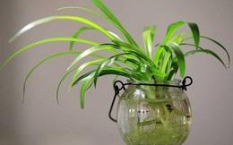 """5 lợi ích sức khỏe """"vô giá"""" khi trồng cây trong nhà: Muốn khỏe mạnh hãy sớm dựa vào cây!"""