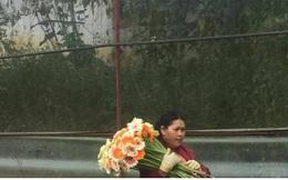 Hàng tỷ cành hoa của Lâm Đồng không tiêu thụ được vì dịch Covid-19