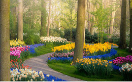 Thiên đường hoa đẹp nhất thế giới không bóng người vì dịch Covid-19
