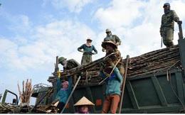 Người trồng mía Sơn La được đảm bảo thu nhập