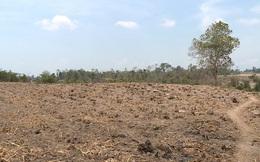 """Phú Yên: Hàng chục ngàn hecta cây trồng """"khát"""" nước, nguy cơ mất trắng"""