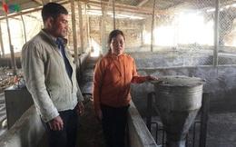 Lâm Đồng người chăn nuôi lợn gặp khó khi tái đàn sau dịch