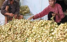 Trái cây rộ mùa, rớt giá
