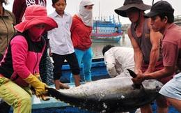 Hải sản rớt giá, ngư dân lao đao