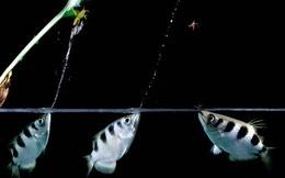 Chuyện cá cung thủ săn mồi và triết lý sâu sắc cho hội công sở mãi lạc lối trên con đường sự nghiệp