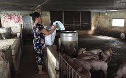 Giá lợn liên tục tăng: Làm gì để người nuôi được lợi?