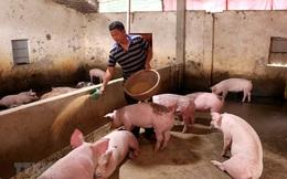 Giá thức ăn làm tăng giá thịt