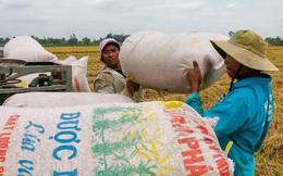 Việt Nam trúng thầu bán 60.000 tấn gạo cho Philippines