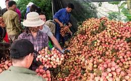 Nhật Bản và Ấn Độ sẽ kéo kim ngạch xuất khẩu rau quả Việt Nam?