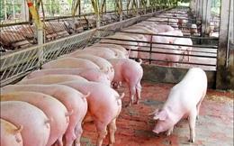 Lợn hơi miền Bắc quay đầu tăng giá, miền Nam tiếp đà giảm