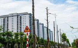 """CLIP: Hàng loạt cây héo khô trên con đường """"ngàn tỉ"""" vừa đi vào sử dụng"""