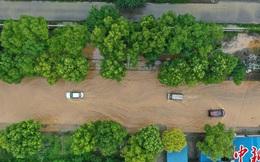 Lũ lụt diện rộng gần đập Tam Hiệp: Xe ô tô chới với trong biển nước