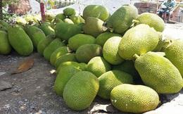 Nhà vườn ĐBSCL đổ xô trồng mít Thái, lo cung vượt quá cầu