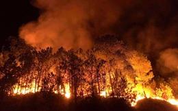 """Những cánh rừng thông """"chết đứng"""" sau những trận cháy kinh hoàng"""